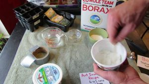 making ant trap with borax